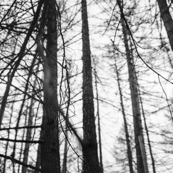 Ball Wald 1
