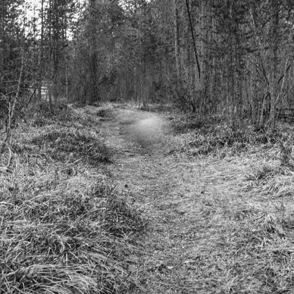 Ball Wald 33